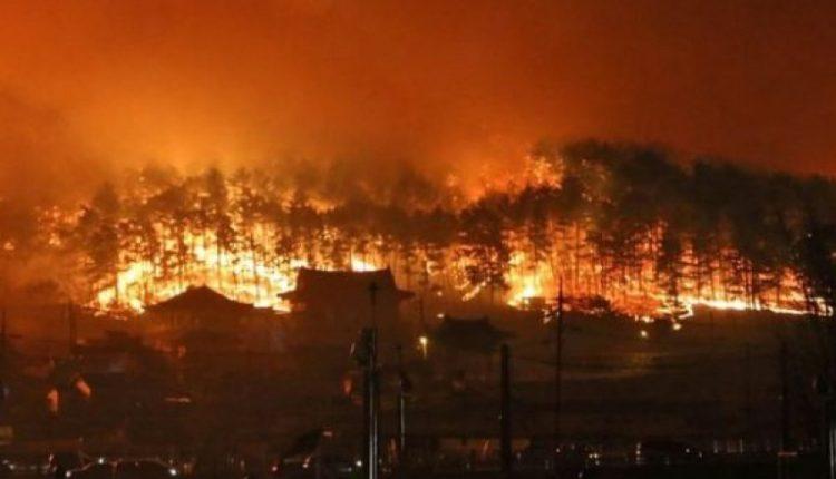 Koreja Jugore përfshihet nga zjarret e mëdha