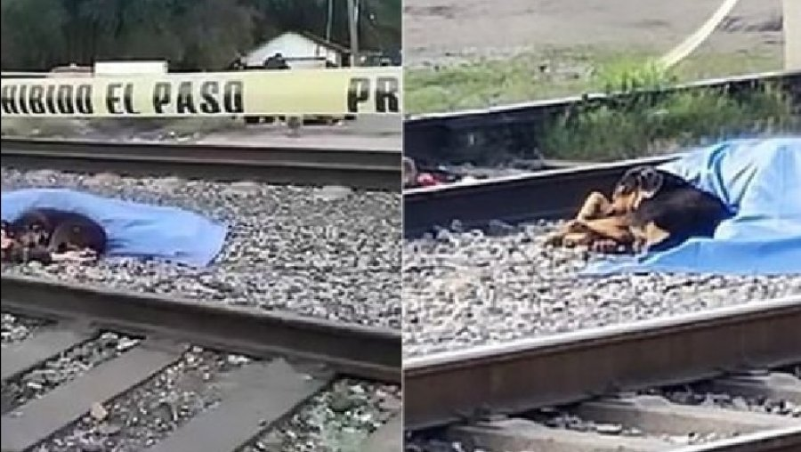 Pronarin ia shtypi treni, qeni besnik nuk i largohet (FOTO)