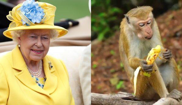 Ish punonjësi i saj: Mbretëresha e Anglisë i ha bananet me thikë dhe pirun që të mos duket si majmun