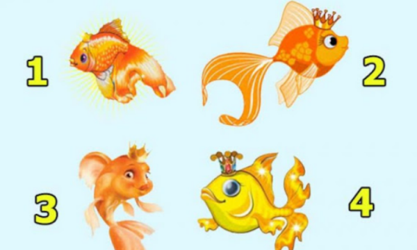 Zgjedhni një peshk: Nuk do ta besoni se çfarë do zbuloni