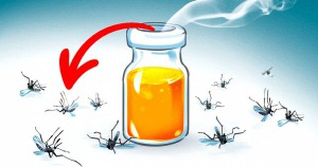 3 aromat që vrasin mushkonjat disa metra larg; Ja si ti krijoni këto receta