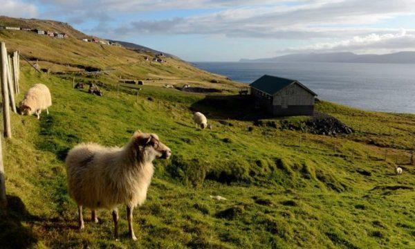 Mbi 2 mijë euro pagë mujore, ishulli i mrekullueshëm kërkon barinj