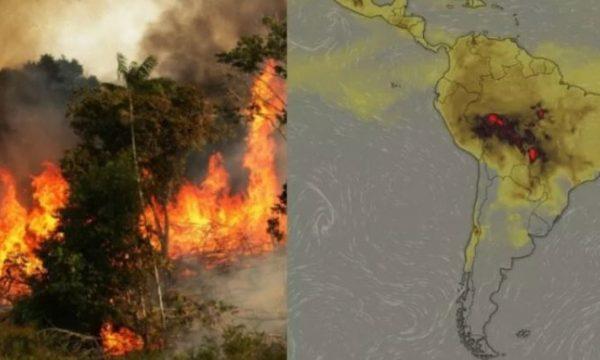 """E frikshme: """"Mushkëritë e botës"""" po shkatërrohen, zjarre masive në Amazonë! (VIDEO)"""