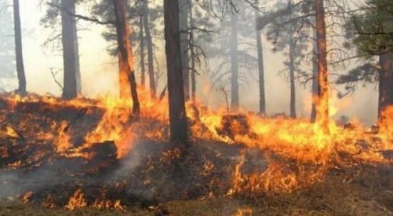 Vatër e re zjarri shpërthen në Lubin të Sarajit