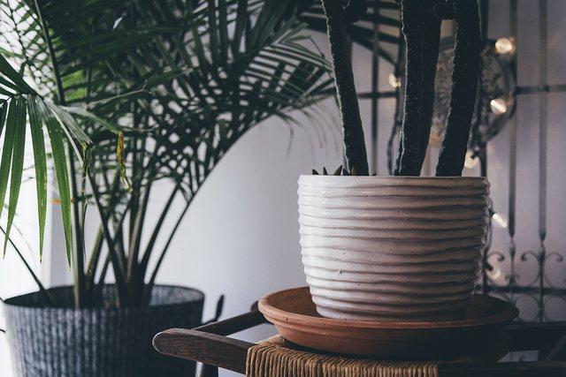 Si ndikon tymi i duhanit tek bimët e shtëpisë?