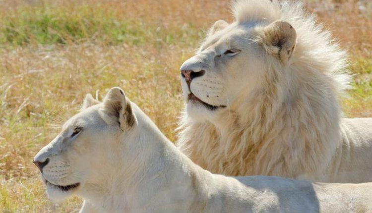 """Luanët e bardhë """"arrijnë"""" në Shkup"""