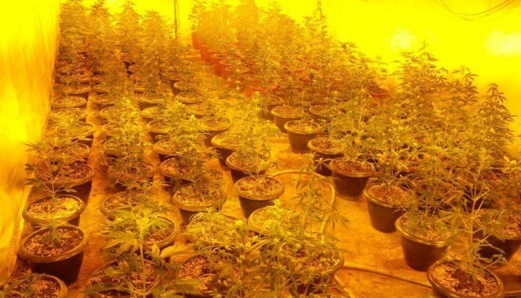 Shkup, zbulohet një laborator për prodhimin e marijuanës