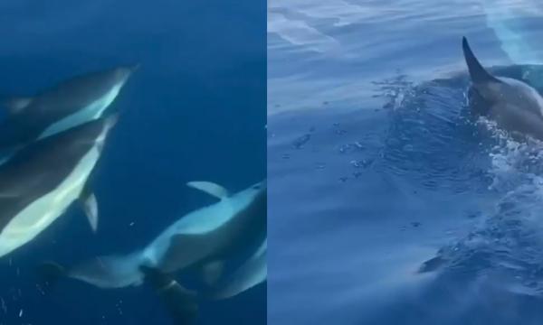 Mrekulli në Himarë! Delfinët dhurojnë spektakël ((VIDEO)